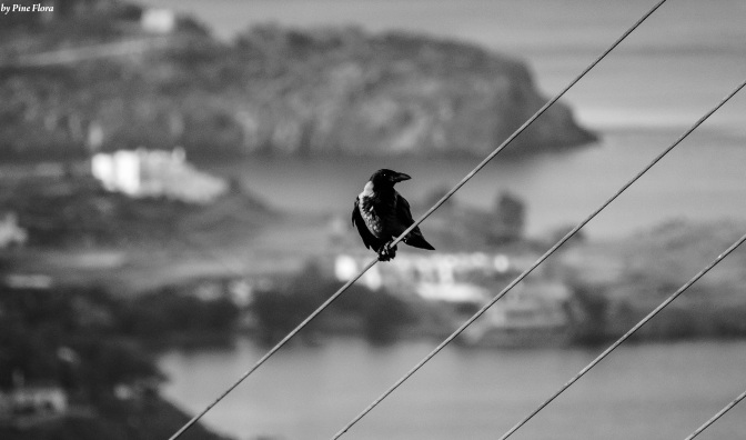 A crow resting for a while