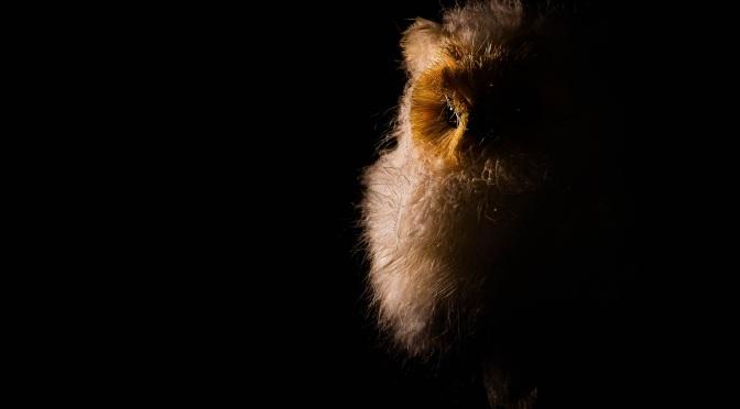 Α white Οwl in the dark..