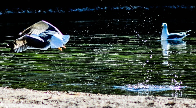Seagulls enjoy the day